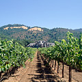 Ledson Winery And Vineyard Sonoma County California by George Oze