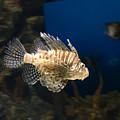 Light Fish by Juan Potts