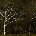 Light In The Darkness by Jennifer Dirnbeck