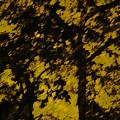 Lighttthru Forest by Florene Welebny