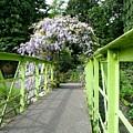 Lilac Colour  Crossing by Martina Fagan