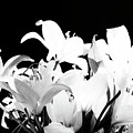 Lilies In Black And White by Maricela Nunez