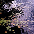 Lilies In The Water by Lyle Crump