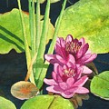 Lily Pads by Sharon Farber