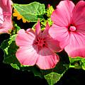 Lite Floral by Debra     Vatalaro