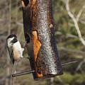 Little Bird by Line Gagne