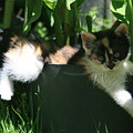 Little Cat by Marta Grabska-Press