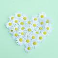 Little Daisy by Poppy Thomas-Hill