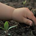 Little Farmer by Ebru Tuna