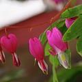 Little Hearts On A Vine  by Jeff Swan