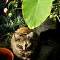Little Kitty by Ivan Rijhoff