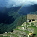 Llama And Rainbow At Machu Picchu by James Brunker