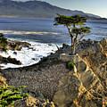 Lone Cypress by Paul Owen