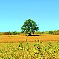 Lone Tree by Jost Houk