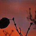 Lonely Leaf by Matthew Fredricey