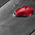 Lonely Petal by Marrissia Ruth