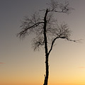 Lonely Tree by Are Lund
