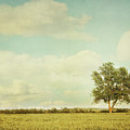 Lonely Tree In Meadow With Vintage Look by Sandra Cunningham