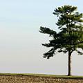 Lonesome Fir by Alan Look