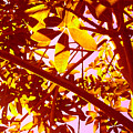 Looking Through Tree Leaves 2 by Amy Vangsgard