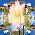 Lotus Mandala In Blue by Pederbeck Arte Gruppe