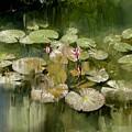 Lotus Pond 1 by Usha Shantharam