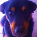 Lou-dog by Karl Reid