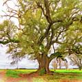 Louisiana Dreamin' by Steve Harrington
