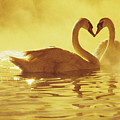 Love Swans by Brent Black - Printscapes