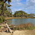 Lowcountry Lagoon by Louise Heusinkveld