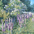 Lupine On Parade by L Diane Johnson