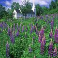 Lupines And Church Sugar Hill by John Burk