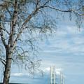 Mackinac Bridge Birch by LeeAnn McLaneGoetz McLaneGoetzStudioLLCcom