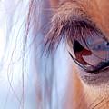 Macro Of Horse Eye by Anne Louise MacDonald of Hug a Horse Farm