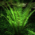 Magic Fern by Svetlana Sewell