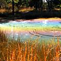 Magic Pond by Melissa Wyatt