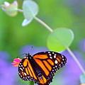 Magical Monarch by Byron Varvarigos