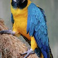 Magnificent Macaw by DigiArt Diaries by Vicky B Fuller