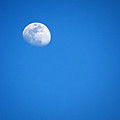 Magnificent Maui Moon by Elizabeth Hoskinson