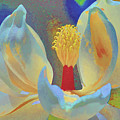 Magnolia Abstract by Deborah Benoit