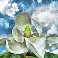 Magnolia Dreams by Wendy J St Christopher