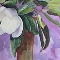 Magnolia by Elizabeth Carr
