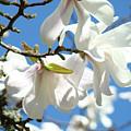 Magnolia Flowers Floral Art Spring Flowering Tree Baslee Troutman by Baslee Troutman