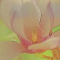 Magnolia In Spring by Deborah Benoit