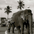 Mahout And Elephant by Louise Fahy
