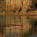 Mammoth Spring Arkansas by Douglas Barnett