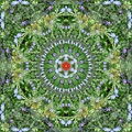 Mandala July 16 by Allen Rybo