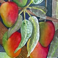 Mango One by Terry Arroyo Mulrooney