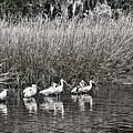 Marsh Hunters by Scott Hansen