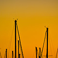 Masts by Spadafora Photography